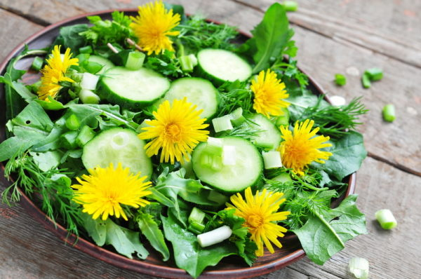 Вкусные салаты из одуванчиков