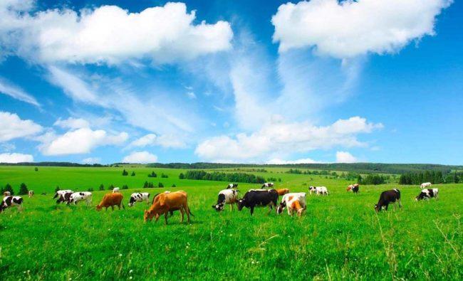 Польза фермерской продукции